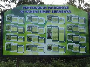 Penyebaran Mangrove di Pantai Timur Kota Surabaya